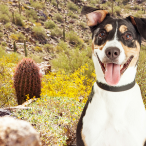 Dog-friendly hiking trails in Phoenix
